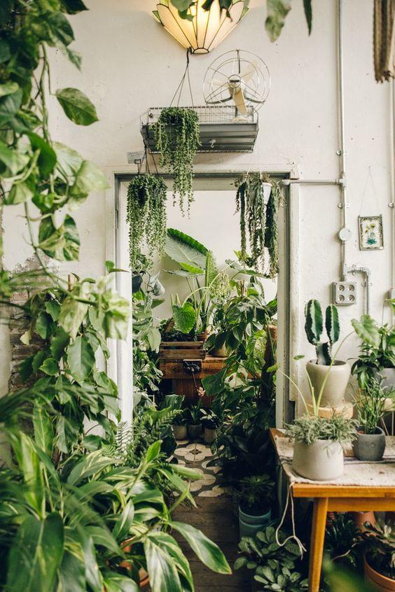 household plants