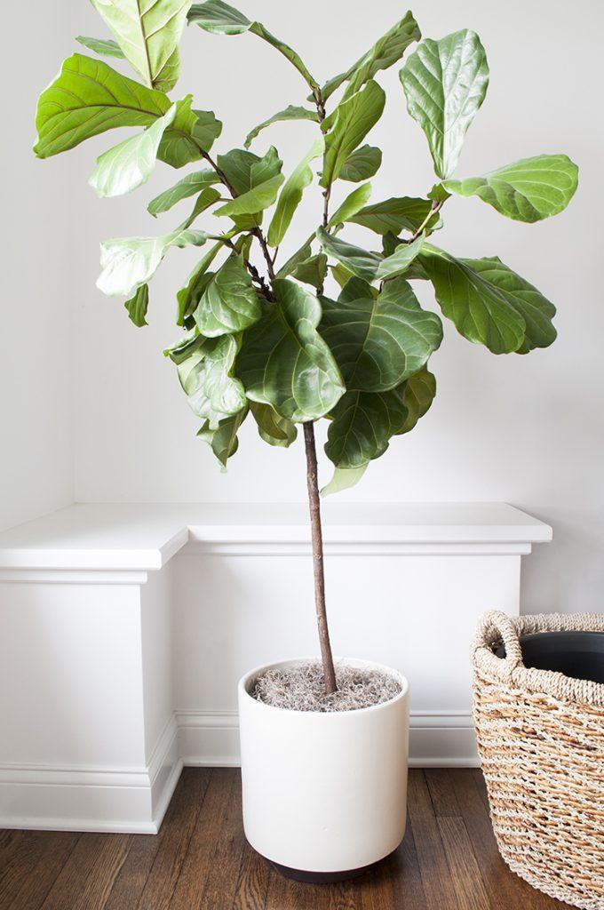 perfect plants