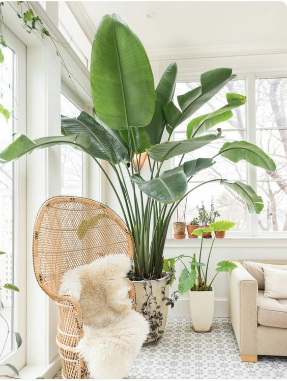 Dos And Don Ts Of Decorating With Plants Gathered Styled