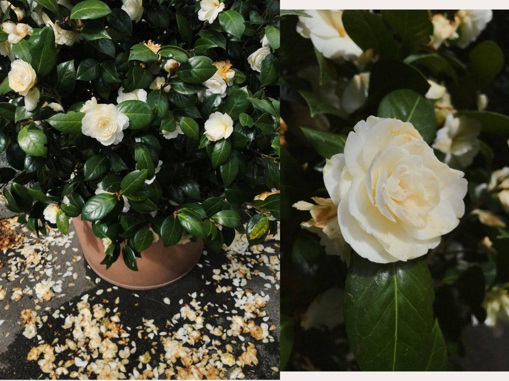 Zurich florists