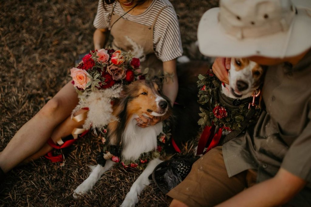 pet friendly florist